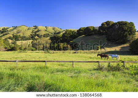 Horses in a beautiful green valley background - stock photo