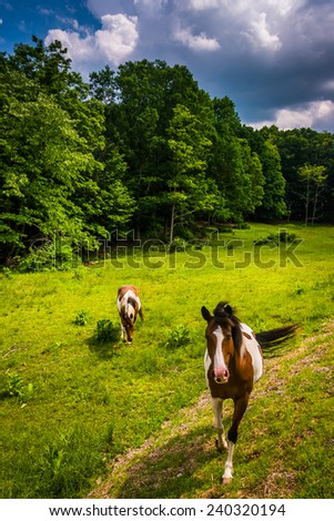 Horses in a farm field in the rural Potomac Highlands of West Virginia. - stock photo