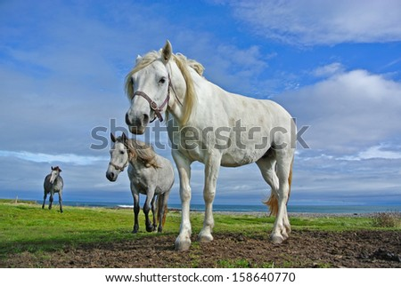 Horses in a field - stock photo