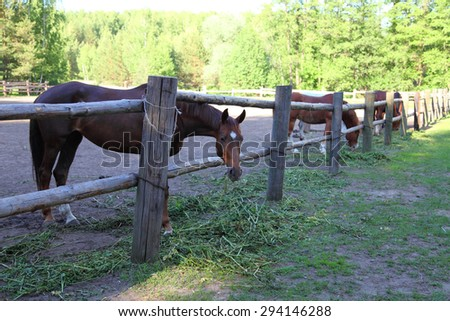 Horses in a paddock on a clear summer day