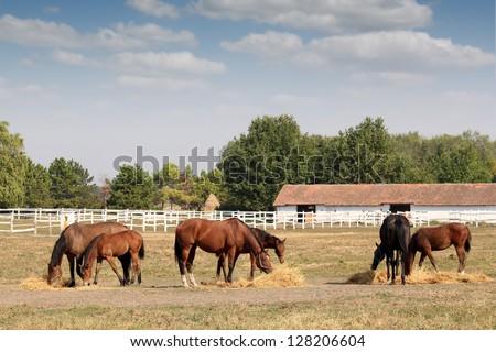 horses in corral farm scene - stock photo