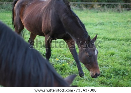 Horses in countryside pasture