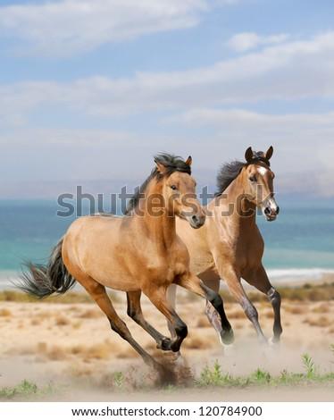 horses in desert - stock photo
