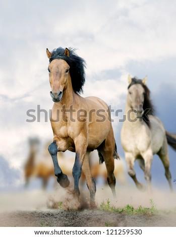 horses in dust - stock photo