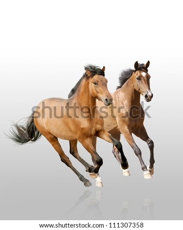 horses in dust in sunset - stock photo