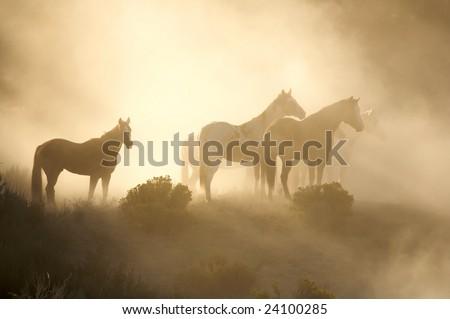 Horses in morning light - stock photo