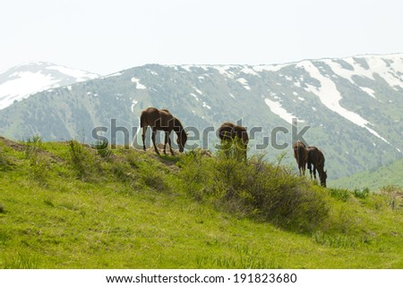 horses in mountain