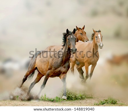 horses in prairies - stock photo
