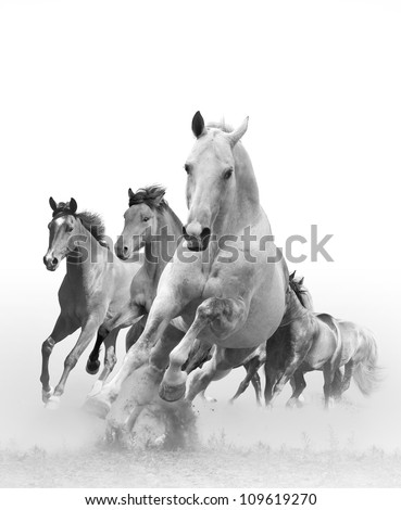 horses in sunset - stock photo