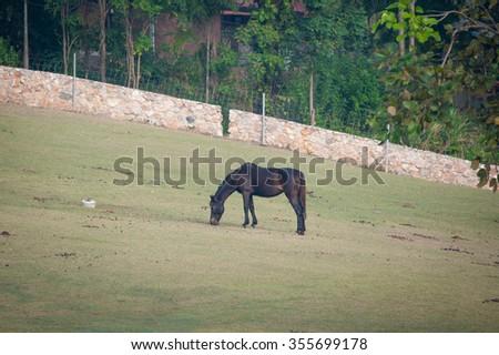 Horses in the farm - stock photo