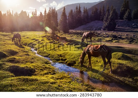 Horses in the Gregory gorge mountains of Kyrgyzstan, Central Asia - stock photo