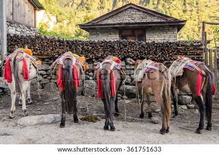 Horses in the nepalese village