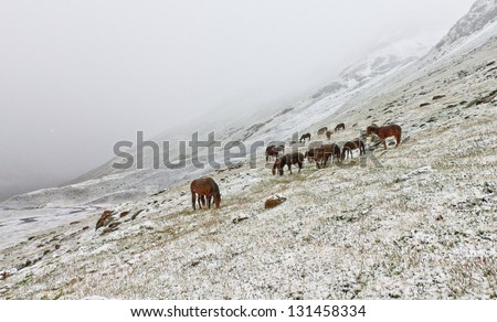 Horses in the snow - stock photo