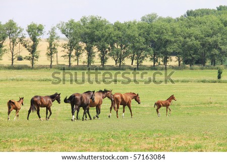 Horses in the summer Landscape - stock photo
