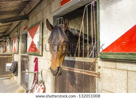 horses in their stalls - stock photo