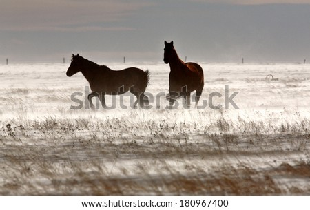 Horses in winter - stock photo