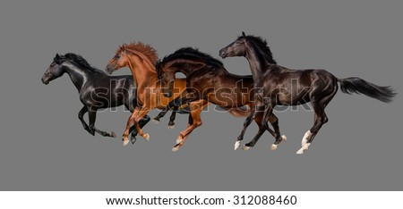 Horses isolated on grey background