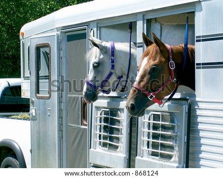 Horses loaded in the trailer, ready for transport.