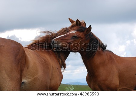 horses love and embrace each other - stock photo