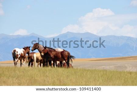Horses - Montana - stock photo