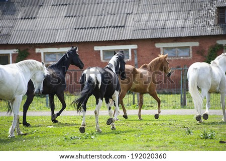 Horses on a farm  - stock photo