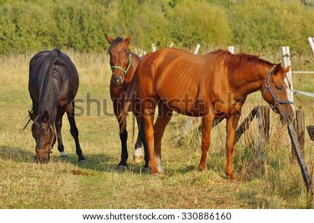Horses on a farm in the autumn meadow