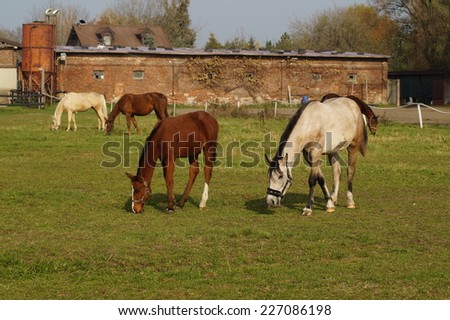 Horses on a farm in the autumn meadow - october