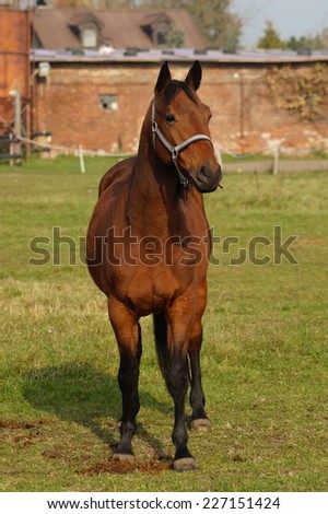 Horses on a farm in the autumn meadow - october - stock photo