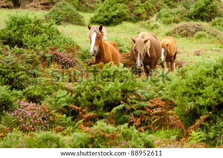 Horses on a green hill in Galicia, Spain - stock photo