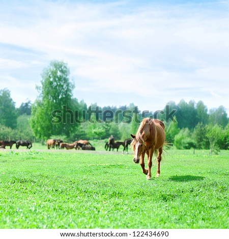 Horses on a pasture in summer day - stock photo