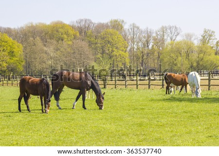 Horses on a spring pasture - stock photo