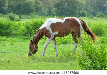 horses on a summer green meadow - stock photo