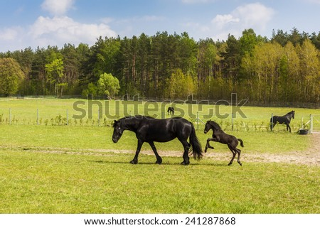 Horses on green pasture - stock photo