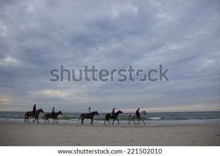 Horses on the Baltic Sea coast just before sunset, Leba, Poland