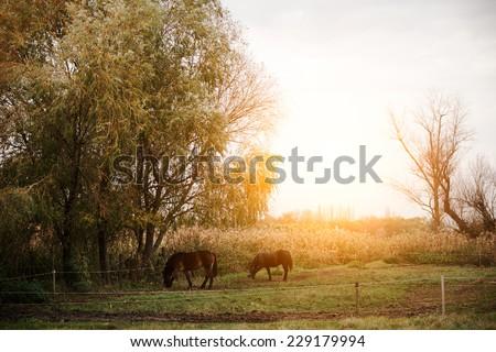 Horses on the field - stock photo