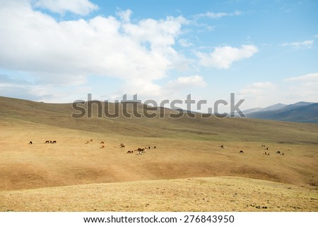Horses on the landscape of Hustai National Park, Mongolia - stock photo