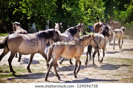 Horses on the way to stable