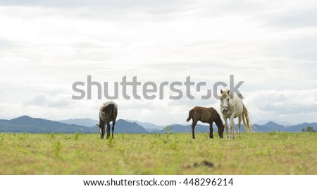 Horses on yellow field background with blue mountain and dark cloud
