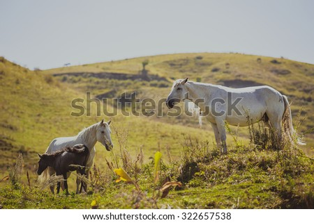 horses outdoors running in the steppe