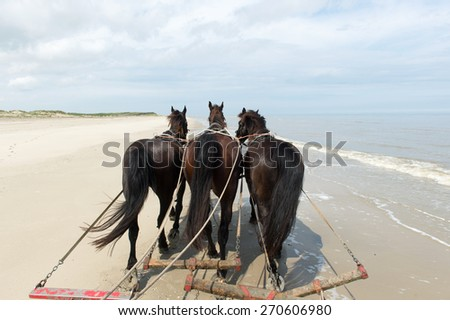 Horses pulling tilt car at the beach from Dutch Terschelling - stock photo