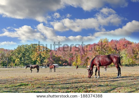 Horses quietly grazing in a field on a farm in Maryland in Autumn - stock photo