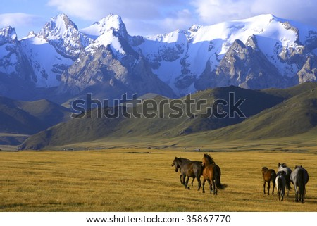 horses running at the mountains - stock photo