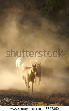 Horses running in a herd encompassed by dust