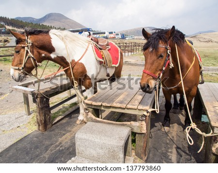 Horses saddled up and ready to ride - stock photo