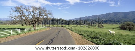 Horses, Santa Ynez Mountains in Spring, Santa Barbara, California - stock photo