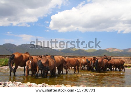 Horses send on a watering place