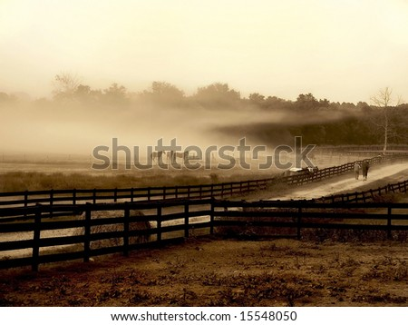 Horses standing at the edge of a field in a isolated fog cloud. - stock photo