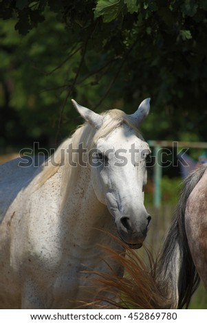 Horses under tree near wooden fence in summer time