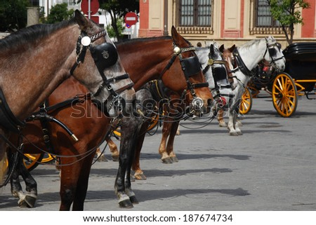 Horses waiting in front of Seville Cathedral, Spain.