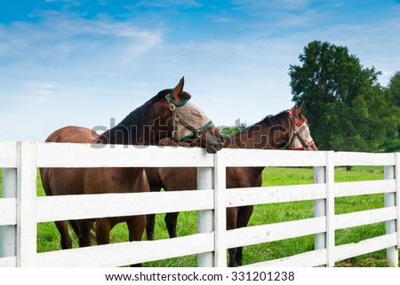 Horses wearing fly masks in summer at horse farm. - stock photo
